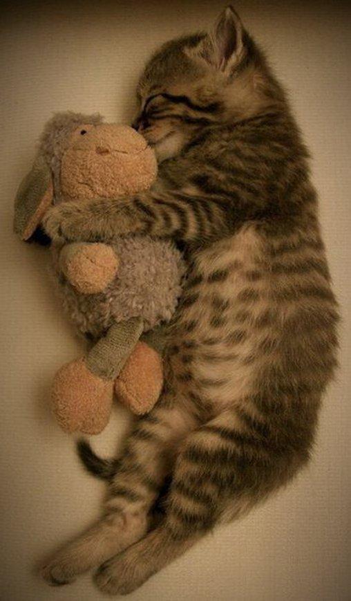 Nicht nur Kinder brauchen beim Einschlafen ein Kuscheltier, auch dieses Katzenjunge benötigt Trost beim Einschlafen.