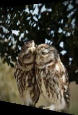 Eulen kuscheln sich liebevoll aneinander