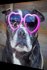So verliebt – Hund mit Atzen-Brille
