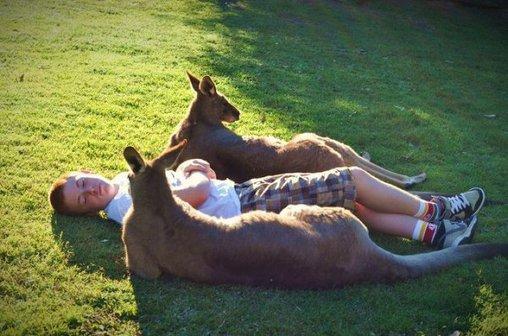 Gemeinsame Ruhepause mit Känguru