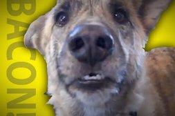 Geschickt ausgetrickst - der sprechende Hund