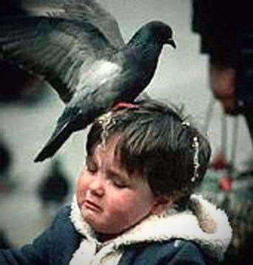 Taube attackiert kleinen Jungen