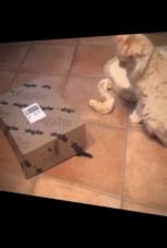 Katzen-Versteckspiel: Du findest mich nie!