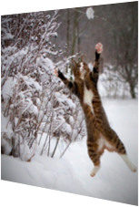 Katzen-Schneeballschlacht!