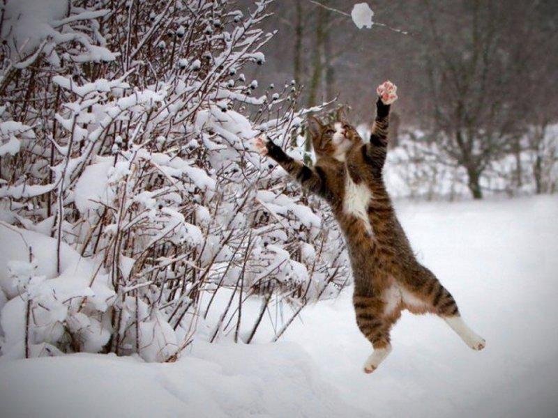 Schnee Lustige Bilder.Witzige Tiere Im Schnee Bilder Videos Lol De Tiere Suss