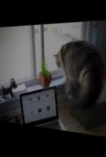 Katzenkampf am Fenster